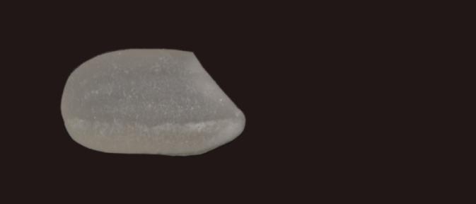 foto longitud grano corto